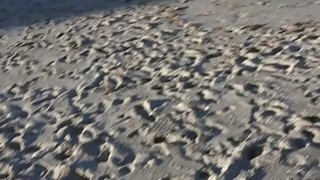 Beach blonde in bikini anal bangs Thumbnail